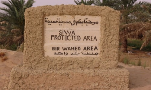 Zdjecie EGIPT / Afryka /  Siwa / siwa oaza źródło