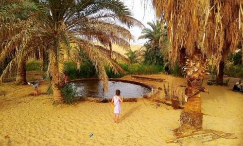 Zdjecie EGIPT / Afryka / Kair / oaza1