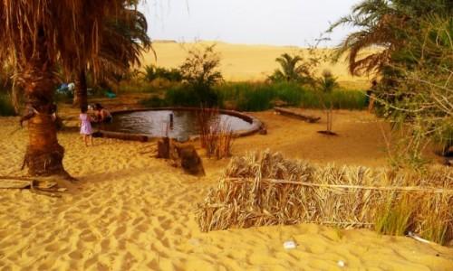 Zdjecie EGIPT / Afryka / Kair / oaza2