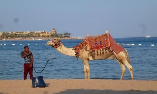 EGIPT / Pustynia Arabska / Hurghada / wspomnienie lata