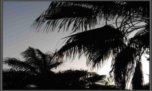 Zdjęcie EGIPT / Egipt - Hurgarda / Hotel Alladyn / palmy