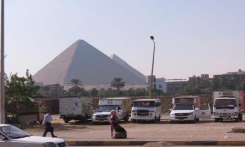 EGIPT / Afryka / Kair / Kebda Camel 1