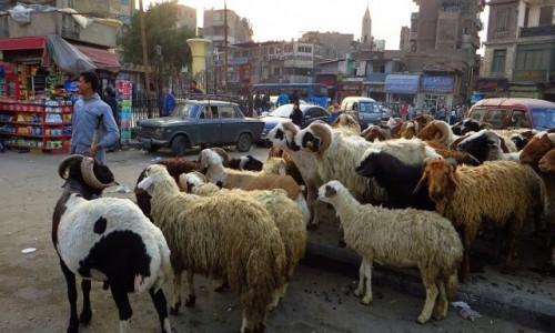 Zdjęcie EGIPT / Kair / Kair - dzielnica muzułmańska / przewodnik stada