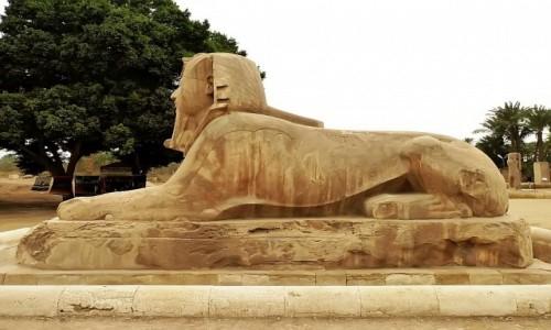 Zdjecie EGIPT / okolice Kairu / Memfis / Muzeum na Wolnym Powietrzu - sfinks