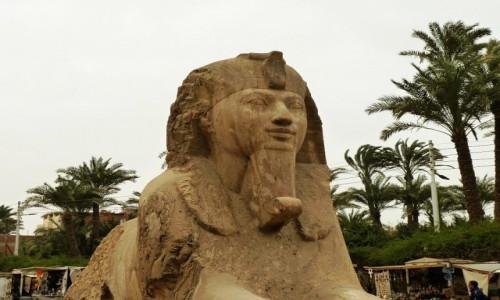 EGIPT / okolice Kairu / Memfis / Muzeum na Wolnym Powietrzu - sfinks