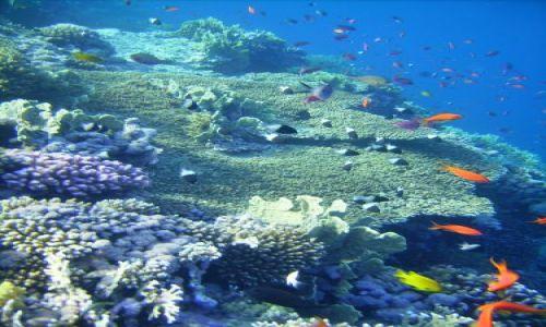 Zdjecie EGIPT / zatoka Aqaba / Sharm el Sheikh, Nabqu Bay / życie na rafie