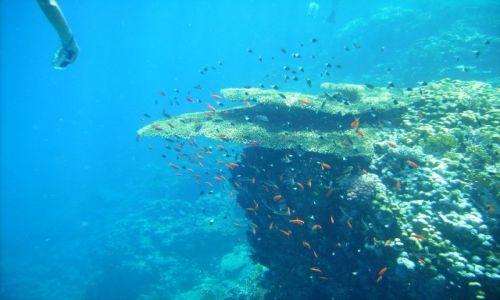 Zdjecie EGIPT / zatoka Aqaba / Ras Mohamed / koralowa