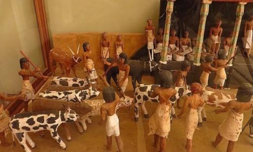 Zdjęcie EGIPT / Kair / Kair - Muzeum Egipskie / przegląd bydła
