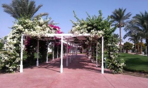 Zdjecie EGIPT / Muhafaza_Prowincja Morza Czerwonego / Hurghada / Kwiecista pergola
