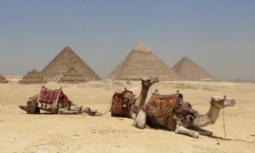 Zdjecie EGIPT / Egipt / Egipt / Egipt
