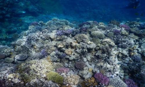Zdjecie EGIPT / Morze Czerwone / Hurghada / rafa koralowa
