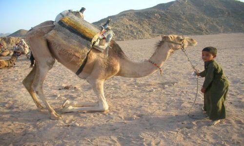 Zdjecie EGIPT / brak / PUSTYNIA / maly kierowca ze swoim srodkiem transportu
