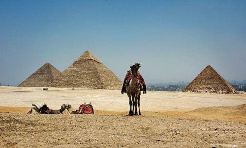Zdjęcie EGIPT / Kair / Giza /