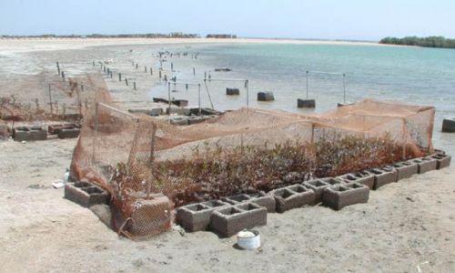 Zdjecie EGIPT / brak / Sharm El Sheikh / Hodowla namorzynów
