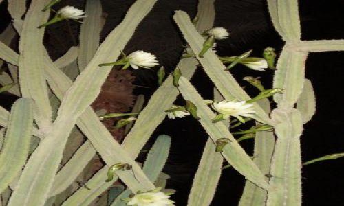 Zdjęcie EGIPT / hurgada / hotel / kaktus