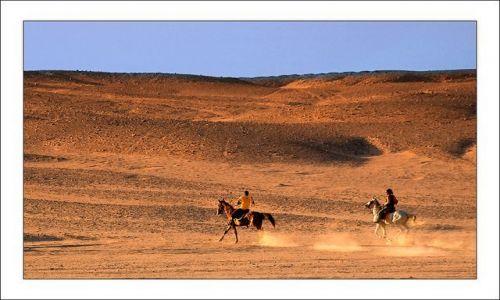 Zdjecie EGIPT / Pustynia Zachodnia / brak / Galopem