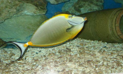 Zdjecie EGIPT / hurgada / akwarium / rybka