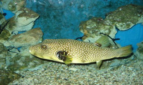 Zdjecie EGIPT / Hurgada / akwarium / ryba