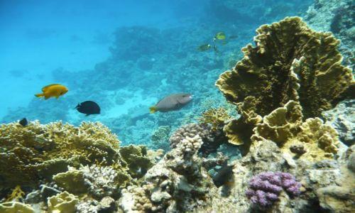 Zdjecie EGIPT / Morze Czerwone / Hurghada / Wesołe Rybki