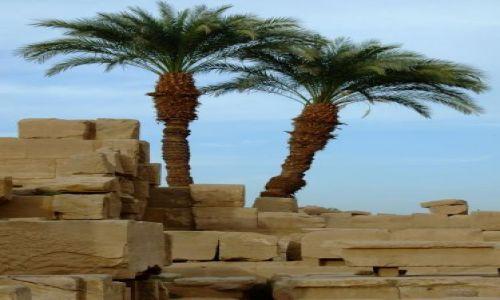 Zdjecie EGIPT / brak / Luxor / Palms