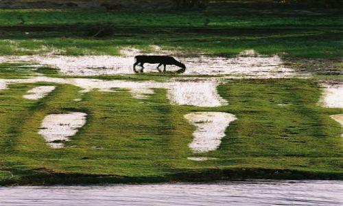 Zdjęcie EGIPT / Nil / Nil / wodopój i wypas nad Nilem