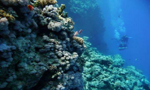 Zdjęcie EGIPT / Hurgharda / Okolice wyspy Giftun / Natura