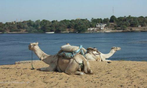 Zdjęcie EGIPT / brak / Assuan / W oczekiwaniu na turystów