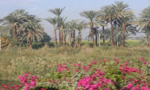 EGIPT / brak / Teby  / Nad życiodajną rzeką