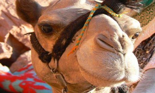 Zdjecie EGIPT / brak / Egipt- mój dom :) / My Frjend ;):)