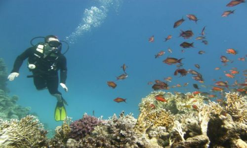 Zdjecie EGIPT / Hurghada / rafa ko�o Hurghady / kilka rybek