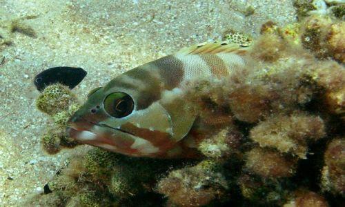 Zdjęcie EGIPT / Morze Czerwone / Taba / wielkie oczy...