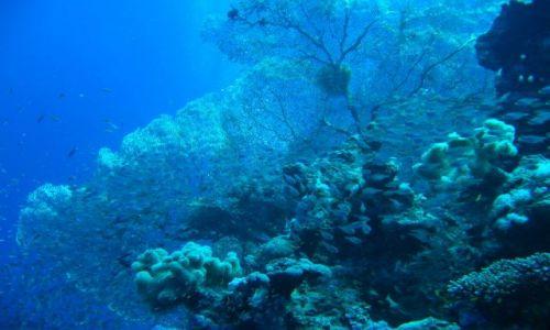 Zdjecie EGIPT / brak / morze czerwone / podwodna przyroda