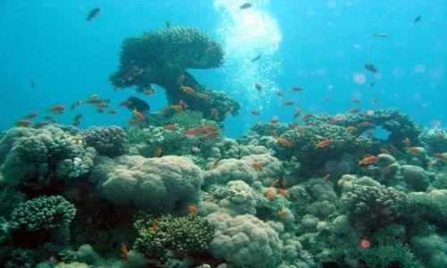 Zdjecie EGIPT / brak / morze czerwone / rafa koralowa