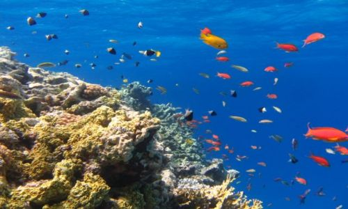 Zdjecie EGIPT / brak / morze czerwone / LICZBA MIESZKAŃCÓW.....