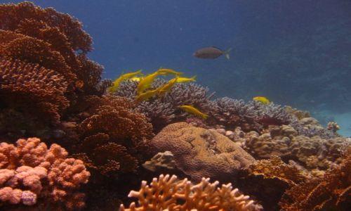 Zdjecie EGIPT / brak / red sea / rafa koralowa