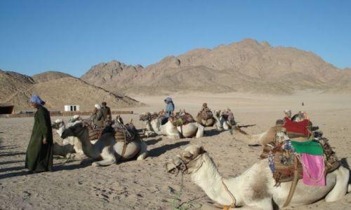 Zdjecie EGIPT / Hurghada / pustynia / Życie na pustyni
