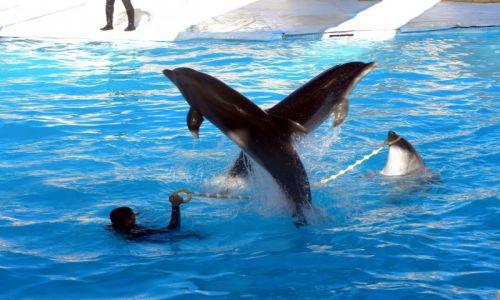 EGIPT / Synaj / Sharm el Sheikh / Delfiny