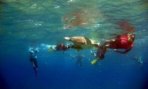 EGIPT / Marsa Alam / Marsa Abudabab / Snorkeling z żółwiami