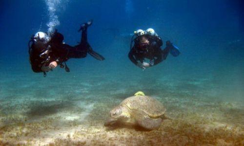 EGIPT / Marsa Alam / Marsa Abudabab / Diving z żółwiami