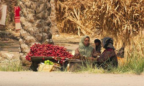 Zdjęcie EGIPT / Gdzies / przy drodze / Handel