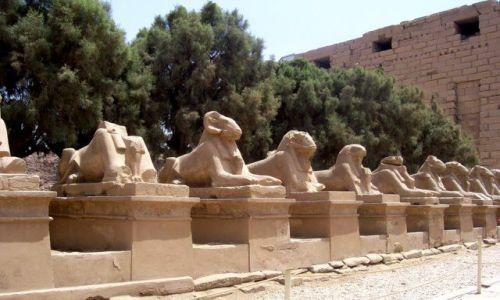 Zdjecie EGIPT / Karnak / światynia w Karnaku / światynia w Karnaku