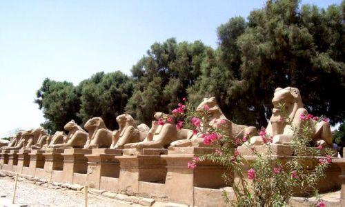 Zdjecie EGIPT / Karnak / świątynia w Karnaku / oleander i lwy w Karnaku
