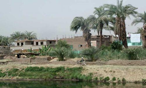 Zdjecie EGIPT / Hurghada / Hurghada / Osiołek