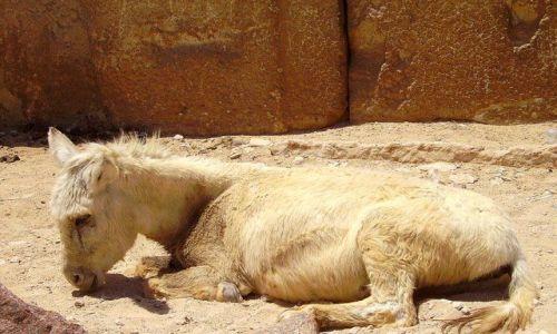Zdjęcie EGIPT / Giza / Giza / u