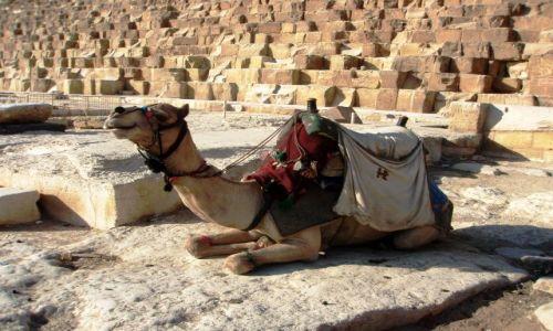 Zdjecie EGIPT / Giza / pod piramidą / W oczekiwaniu na klienta