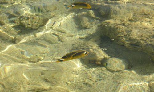 Zdjecie EGIPT / sharm el sheikh / sharm el sheikh / fotki z egipskiego snorkowania -ile rybek jest na zdjęciu ? :-)