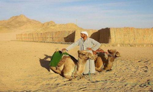 Zdjecie EGIPT / Okolice Hurgady / wioska beduińska / Komu taxi ?