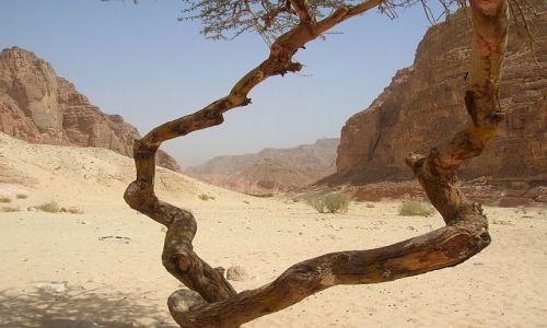 Zdjecie EGIPT / Synaj / brak / Kolorowy Kanion 6