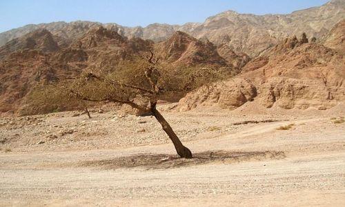Zdjęcie EGIPT / Synaj / brak / Kolorowy Kanion 11