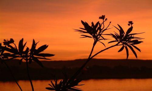 Zdjęcie EGIPT / brak / Sahara / Nilem